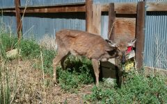 Zombie Deer Nearing Ohio